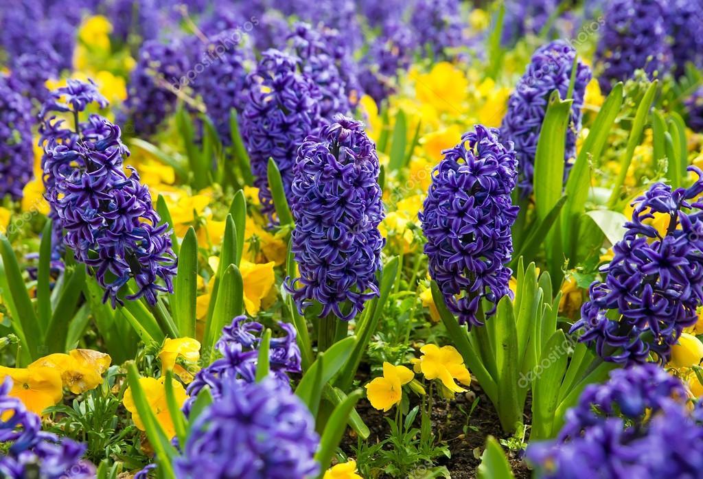 Фото жовті квіти