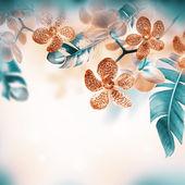 Fotografie krásné tropické orchideje