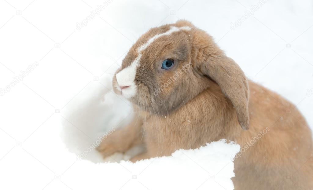 Lustige Niedlichen Kaninchen Mit Blauen Augen Sitzen Im Schnee