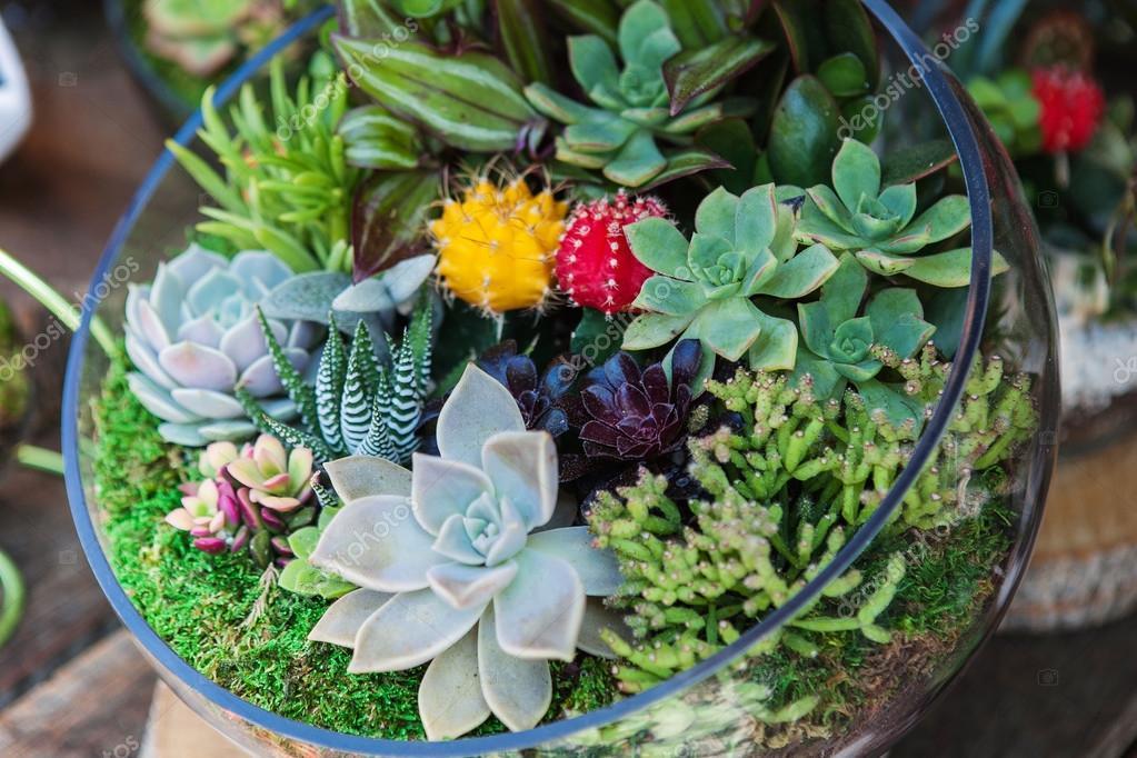 Terrarium with cactus succulent plant