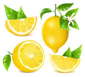 Fotografie Fresh lemons with leaves and blossom.
