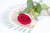red rose on money