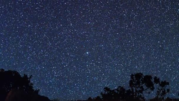 Stromy na pozadí hvězd