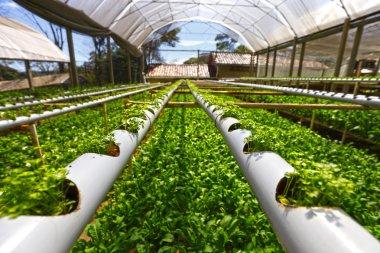 Green Planting hydroponics