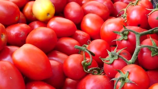 frische Tomaten auf der Messe