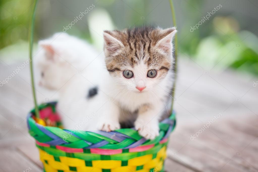 Gatitos en una canasta de colores — Foto de stock © maksimka3738 ...