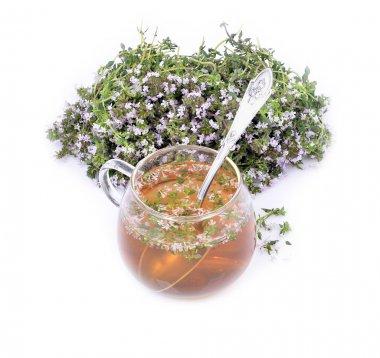 Thymus vulgaris / Common Thyme/