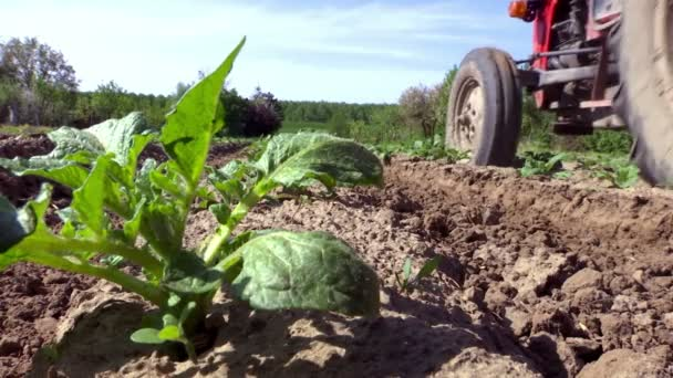 Půdy půdy plodiny brambory od traktoru