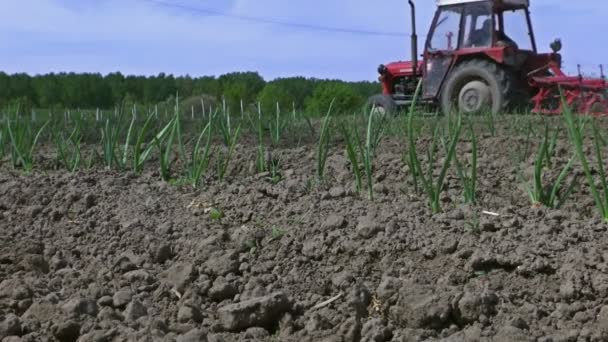 Tractor with agricultural machinery in a onions field