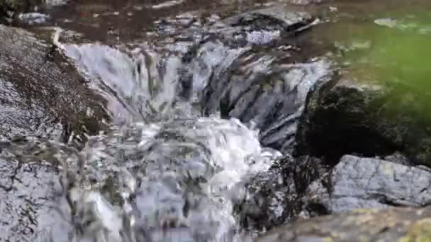 Lesní pramen čisté vody