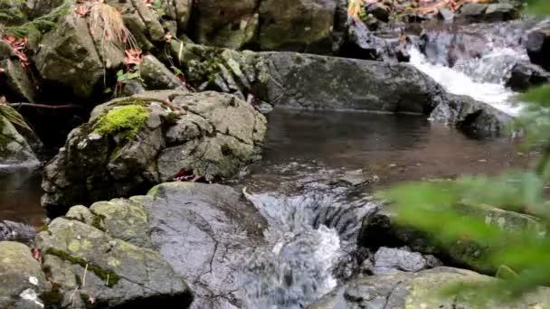 Lesní potok v nedotčené přírodě