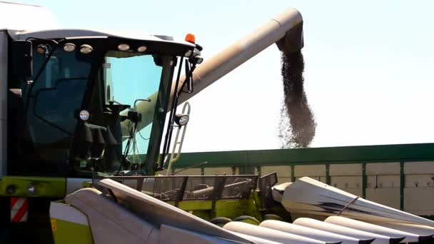 sklizeň sklízecí a traktor přívěs