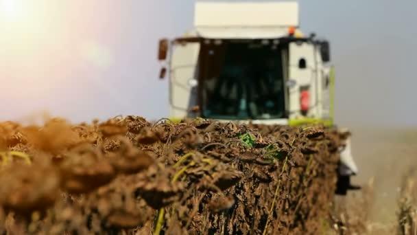 kombinovat práci na slunečnicová pole