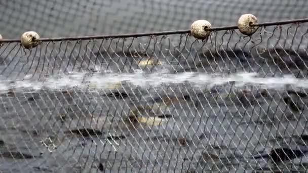 Resekční operace v rybník