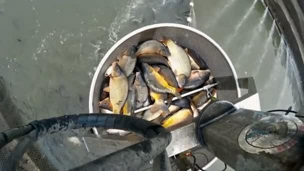 Mechanické rameno pro sběru ryb