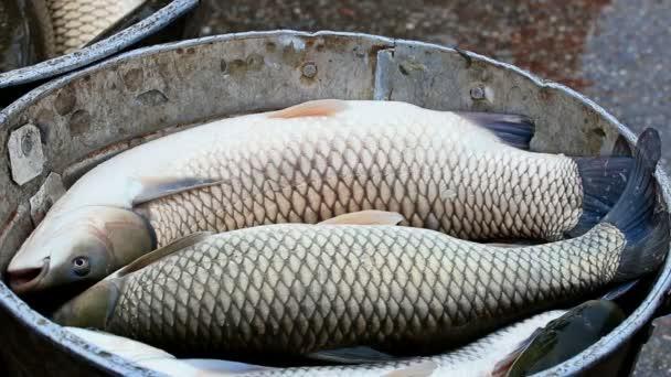 Készen áll a piaci friss hal
