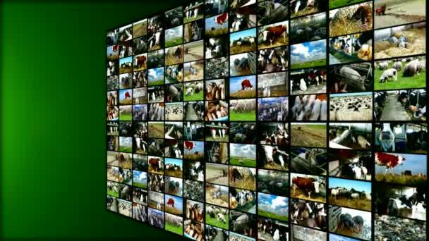 Farm animals- split screen