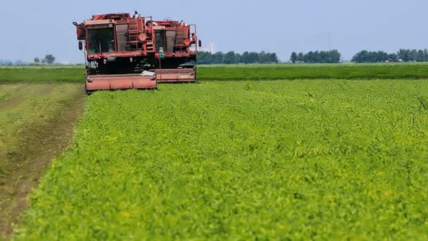 Erntemaschinen auf den Feldern unter den Erbsen