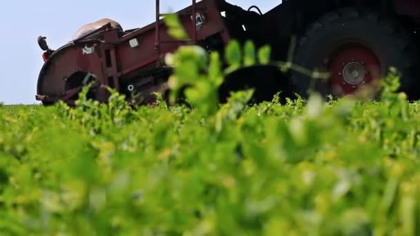 Mähdrescher erntet, grüne Erbsen