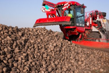 Sugar beet and modern agricultural machinery in a field