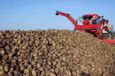 The harvest of sugar beet