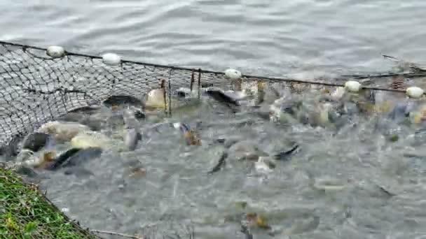 Chov a rybaření na rybníku