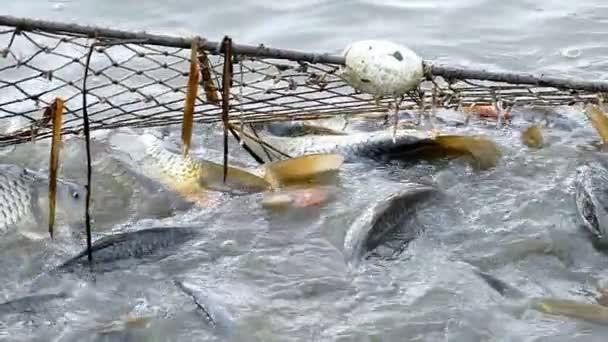 Produkty rybolovu rybářská síť