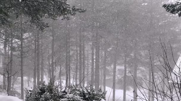 A hó, a fenyves erdő nagy pehely