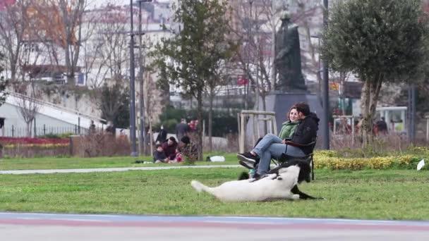 ISTANBUL, TÜRKEI - 7. Januar 2021. Zwei streunende Hunde spielen und beißen.