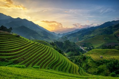Rice fields on terrace in rainy season at Mu Cang Chai, Yen Bai, Vietnam