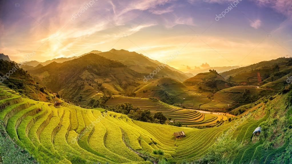 Rice fields on terraced in sunset at Mu chang chai, Yen bai, Vie