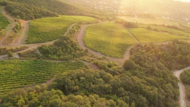 Video z leteckého letounu. Vinice pěstující hrozny pro červené víno. Letecký pohled letounu. Zelené zvlněné kopce. Horská krajina. Vinifikace, pěstování hroznů, vinařství