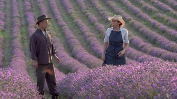 Obchod a průmysl levandulové farmy. Rodina farmářů na kvetoucím poli. Levandulové farmaření pro zisk. Produkce esenciálních olejů, produkty, trhy a zábavní farma