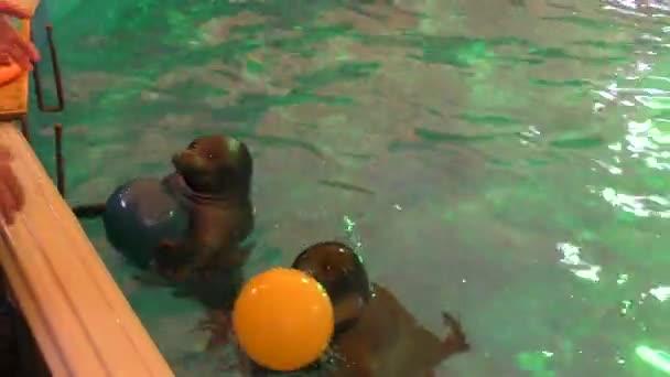 Baikal seal or a freshwater seal