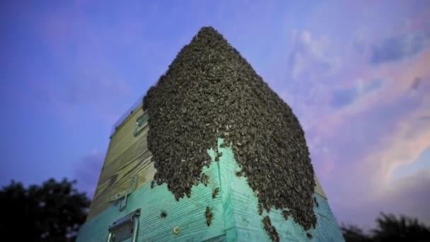 Ein riesiger Bienenschwarm auf dem Stock. Bienen machen Honig. Bienenzucht, Bio-Bauernhof. Kleinunternehmen. Honigbienen brüten. Bienenzucht, Biolebensmittel, Bienenwaben, Bienenstock
