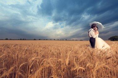 Groom kissing the bride in wheat field