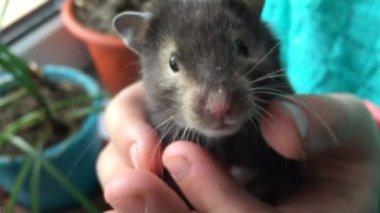 hamster gratis videoer