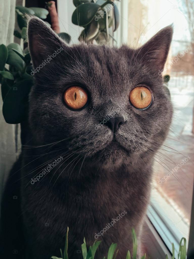 Imagenes Sorprendidos Gato Con Los Ojos Sorprendidos Foto De