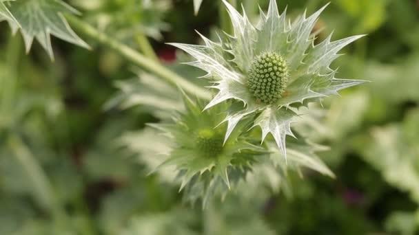 Zelené rostliny zblízka v zahradě