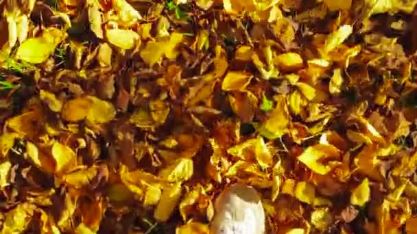 POV zastřelil procházku podzimní listí