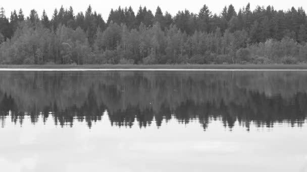 Černá a bílá lesní odraz v jezeře