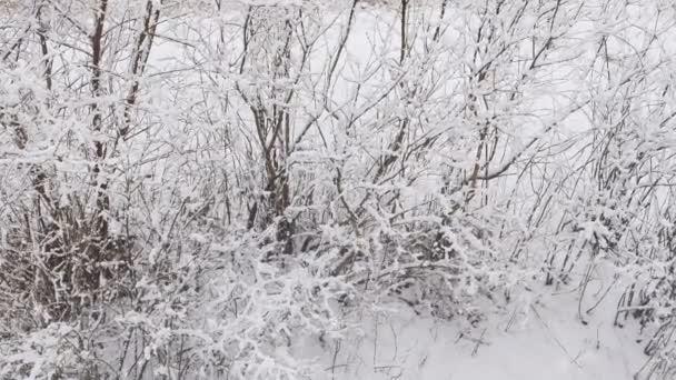 der große Schneefall im Wald
