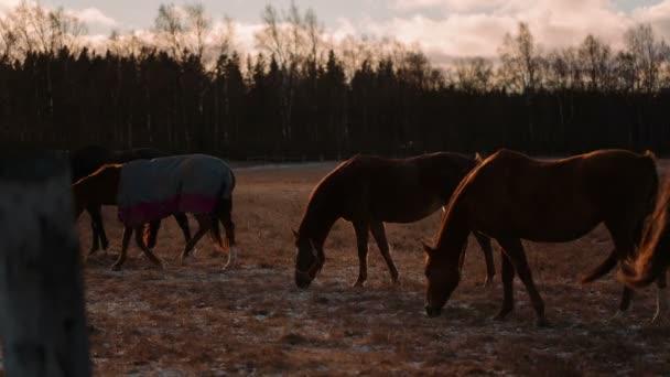 Kůň ve výběhu.