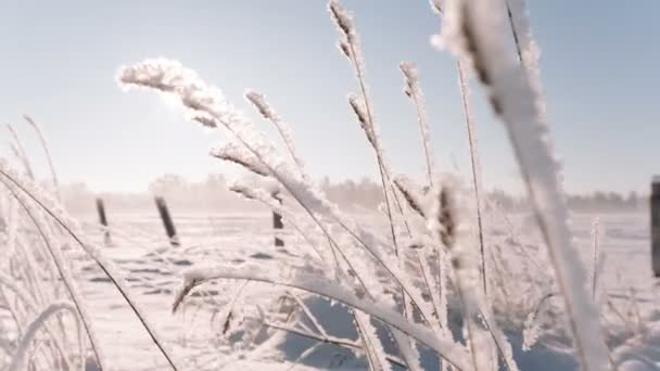 Kamera se pohybuje zprava doleva, odstranění zamrzlé trávě ve velkém poli