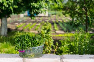 Fresh Greens in Bucket on top of Garden Brick Wall