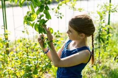 Young Girl Inspecting Leaves on Green Tree