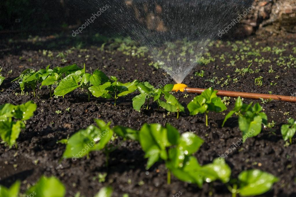 New young vegetable plants in a spring garden