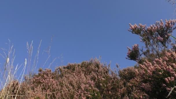 Heath shrubs against blue sky