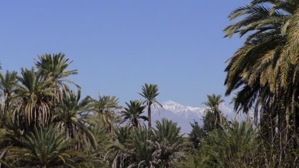 Zasněžené hory, palmy a modrá obloha