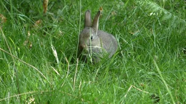 Wild Baby Kaninchen in der Wiese